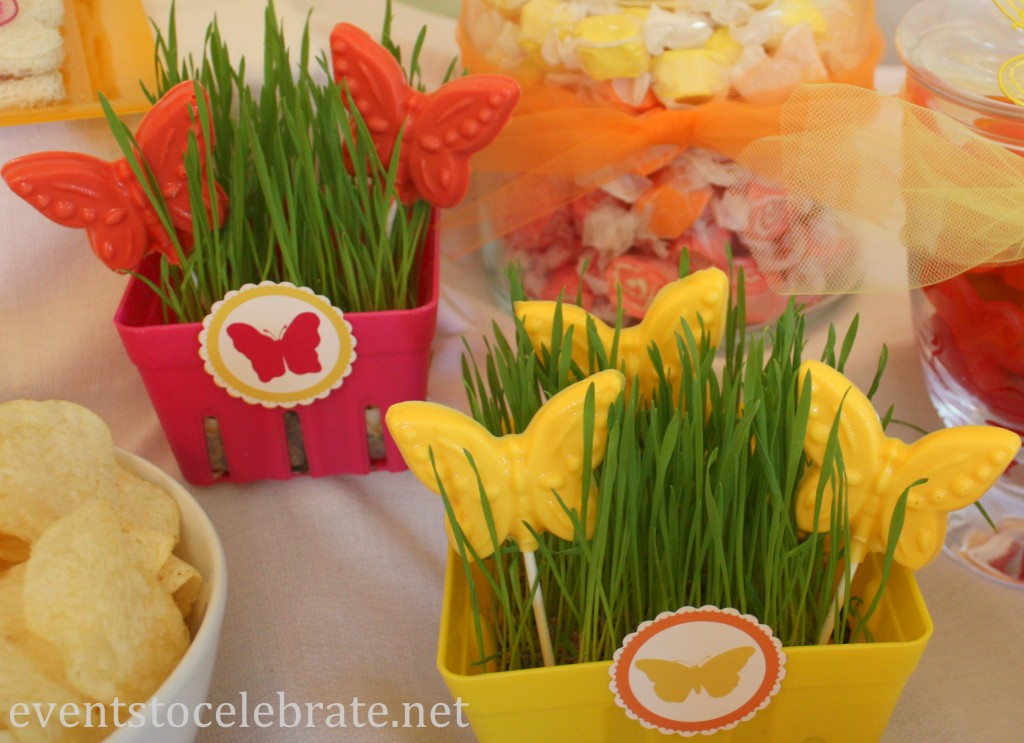 Butterfly Themed Party - growing wheat grass decoration - eventstocelebrate.net