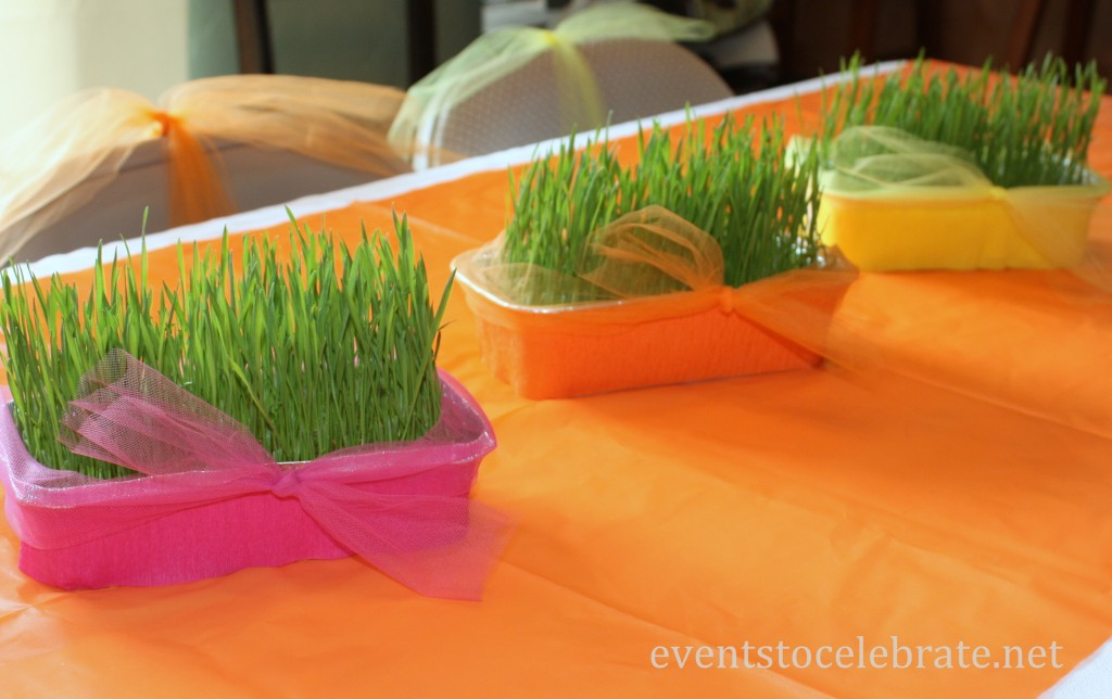 Butterfly Themed Party - growing wheat grass - eventstocelebrate.net